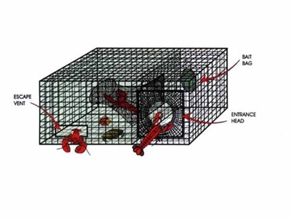 Lobster Traps Including Small, Medium and Large Sizes for Choices